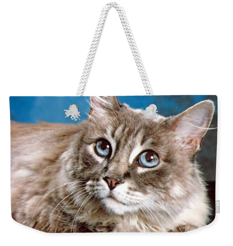 Mixed Breed Cat Weekender Tote Bag featuring the photograph Big Blue Eyes by Larry Allan