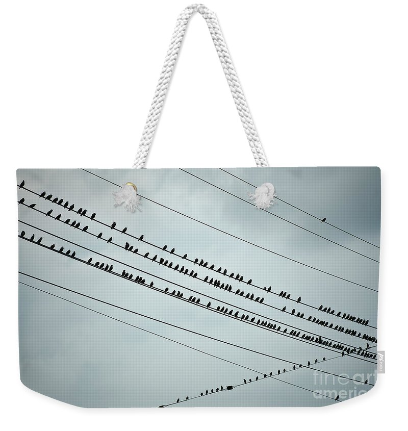 Aves Weekender Tote Bag featuring the photograph Birds On A Wire by John Greim