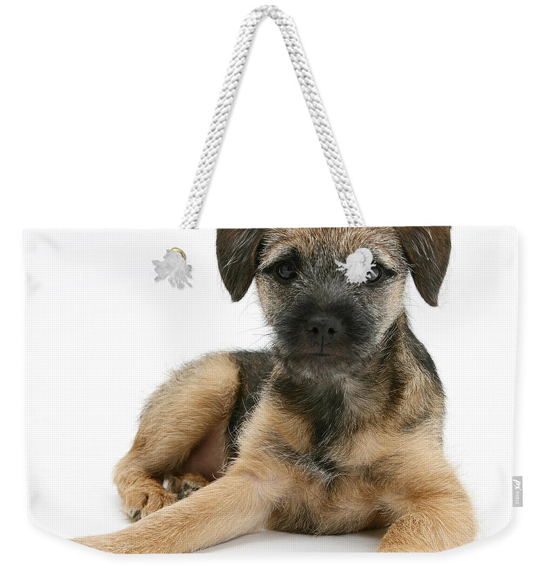 Animal Weekender Tote Bag featuring the photograph Border Terrier Puppy by Mark Taylor