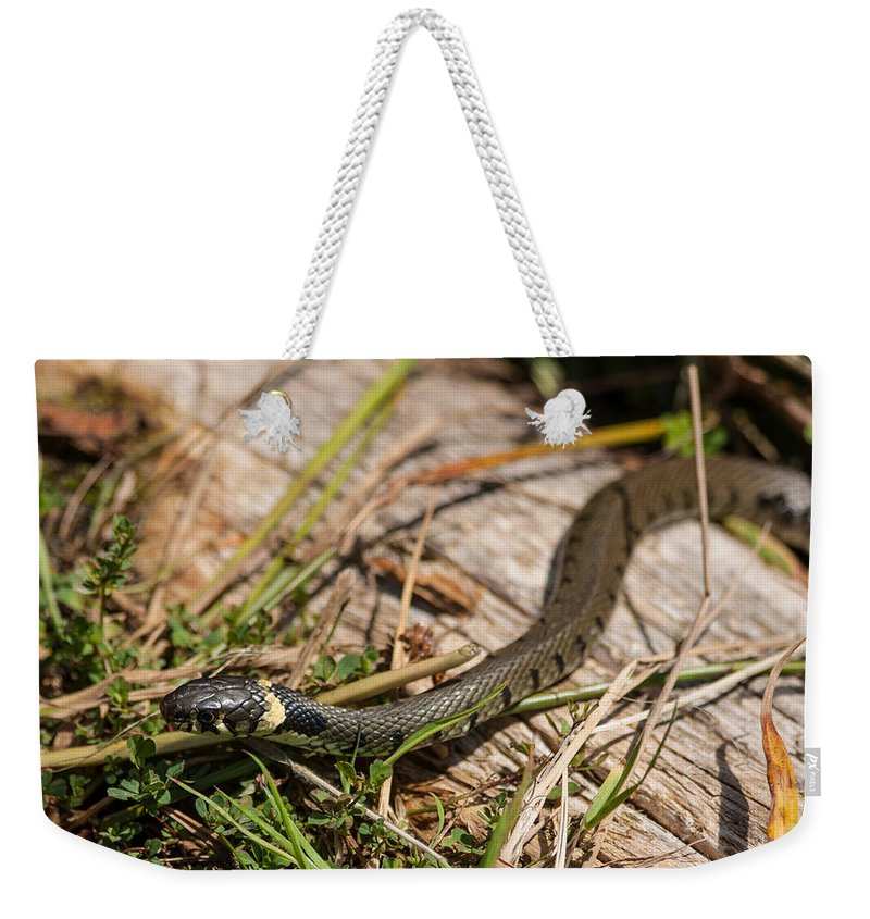 British Grass Snake Weekender Tote Bag featuring the photograph British Grass Snake by Dawn OConnor