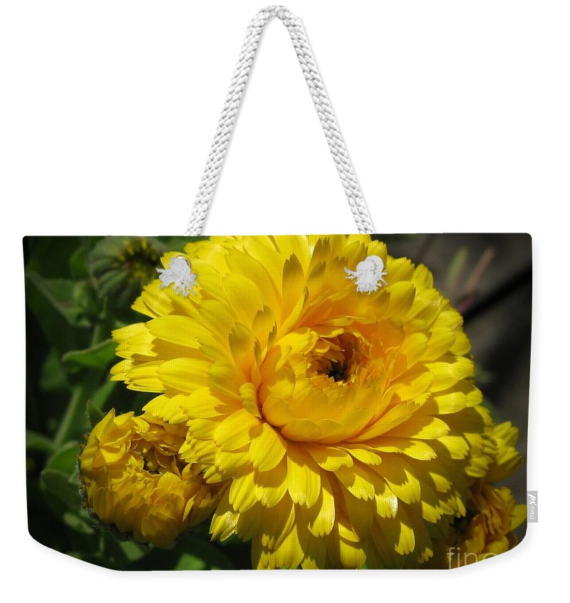 Calendula Weekender Tote Bag featuring the photograph Calendula Named Bon-bon Yellow by J McCombie