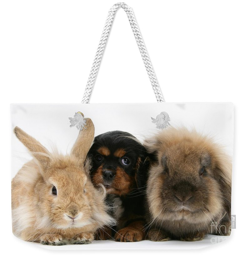 Nature Weekender Tote Bag featuring the photograph Cavalier King Charles Spaniel by Mark Taylor