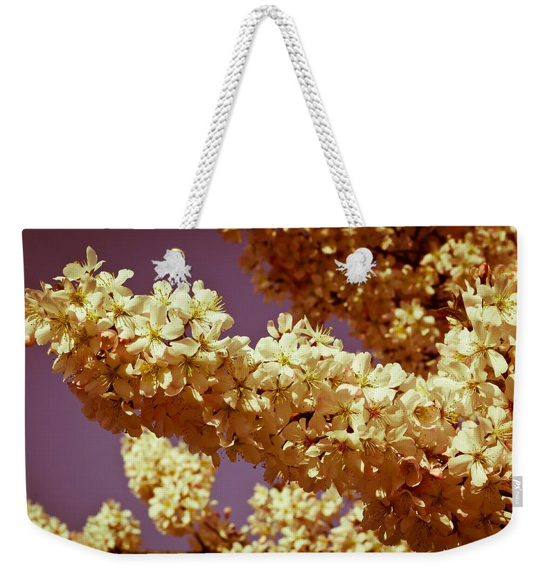 Cherry Weekender Tote Bag featuring the photograph Cherry Blossom by David Pyatt