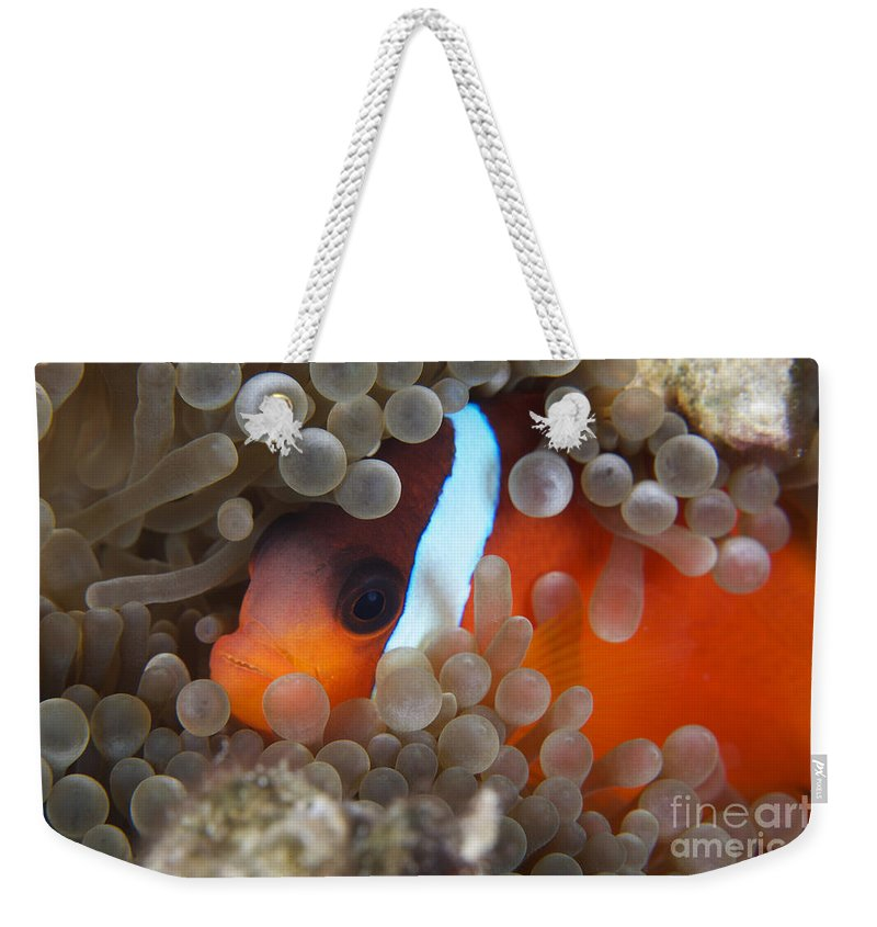 Amphiprion Melanopus Weekender Tote Bag featuring the photograph Cinnamon Clownfish In Its Host Anemone by Terry Moore