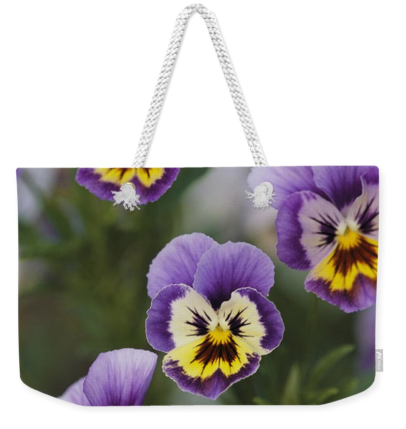 Plants Weekender Tote Bag featuring the photograph Close View Of Pansy Blossoms by Darlyne A. Murawski