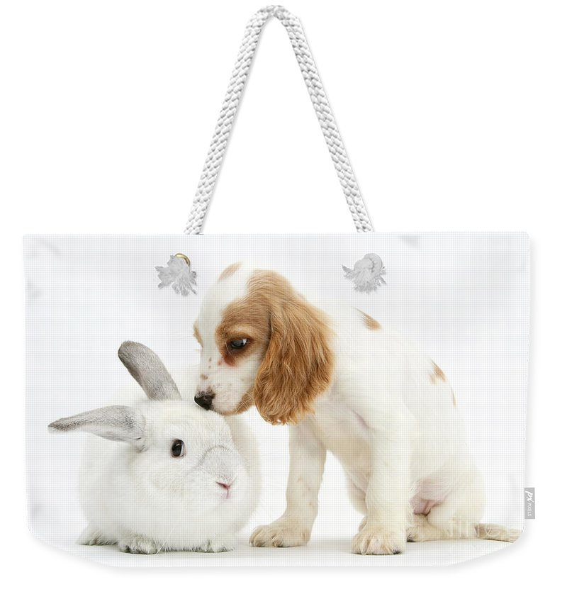Nature Weekender Tote Bag featuring the photograph Cocker Spaniel And Rabbit by Mark Taylor