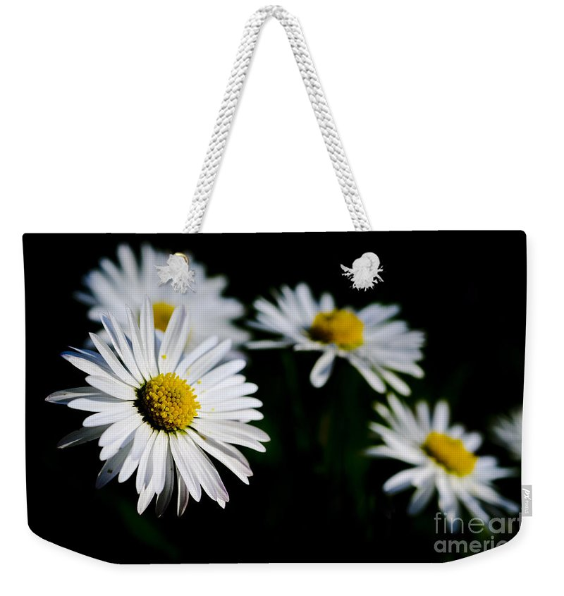 Flower Weekender Tote Bag featuring the photograph Daisy Flowers by Mats Silvan