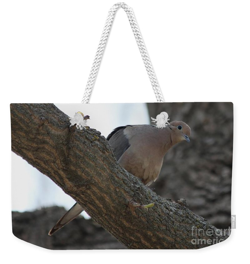 Dove Weekender Tote Bag featuring the photograph Dove by Lori Tordsen