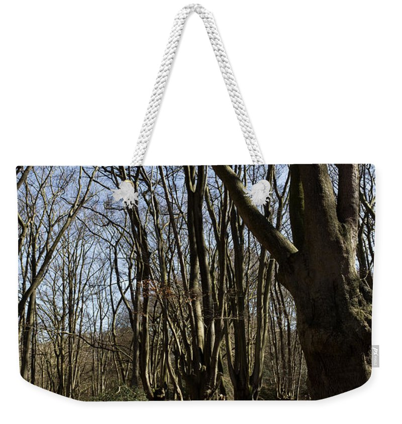 Epping Weekender Tote Bag featuring the photograph Epping Forest by David Pyatt