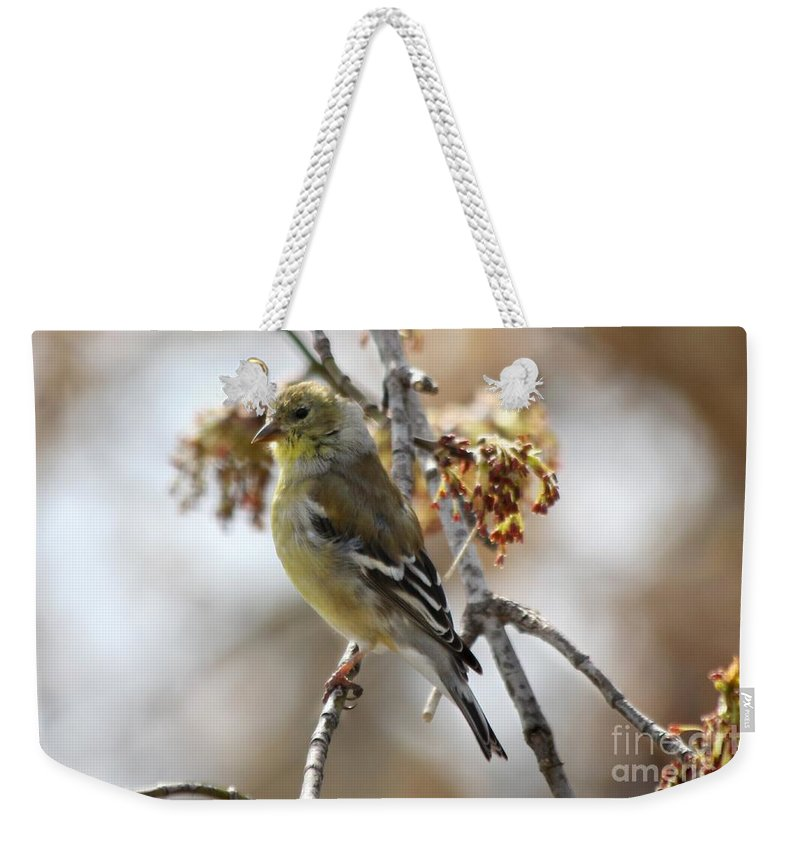 Finch Weekender Tote Bag featuring the photograph Finch by Lori Tordsen