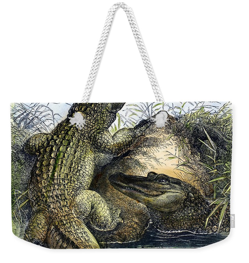 19th Century Weekender Tote Bag featuring the photograph Florida Alligators by Granger