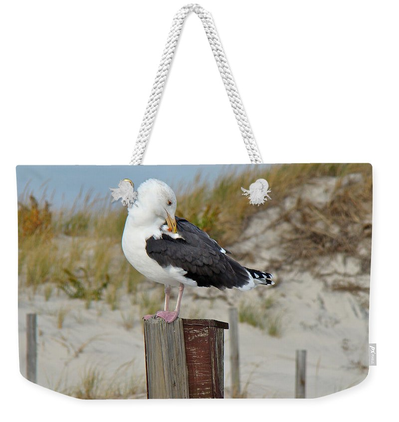 Gull Weekender Tote Bag featuring the photograph Great Black-backed Gull  Larus Marinus by Mother Nature