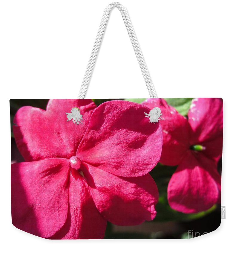 Impatiens Weekender Tote Bag featuring the photograph Impatiens Named Dazzler Burgundy by J McCombie