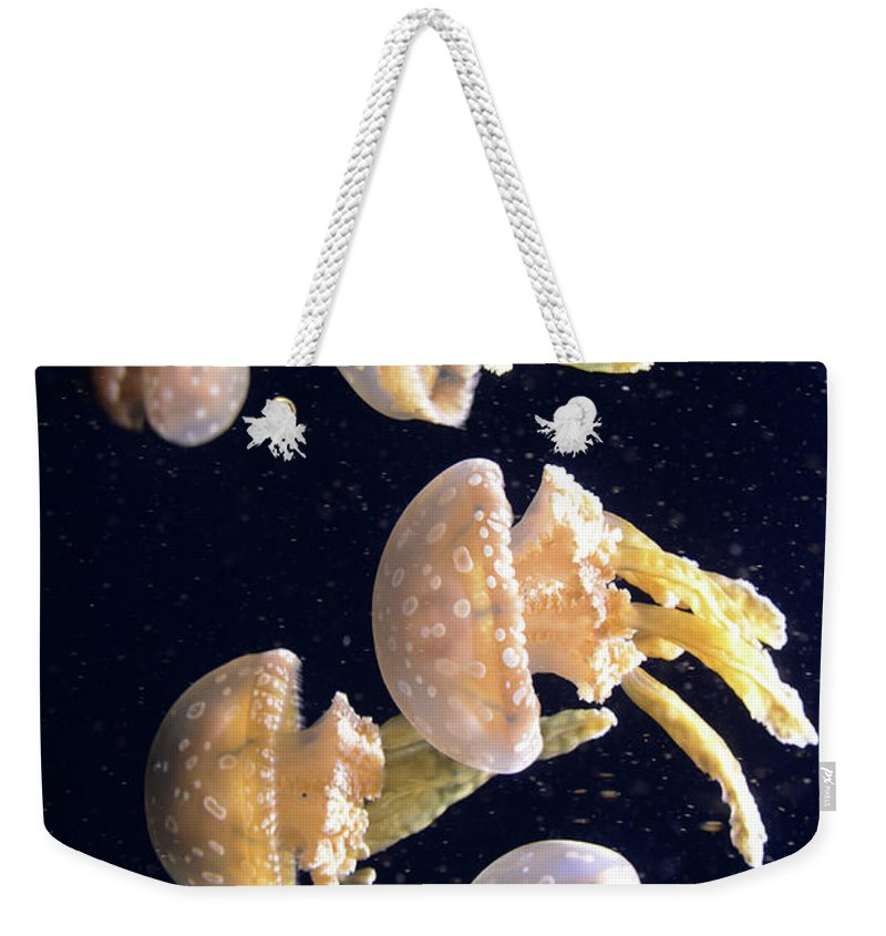 Jellyfish Weekender Tote Bag featuring the photograph Jellyfish 3 by Bob Christopher