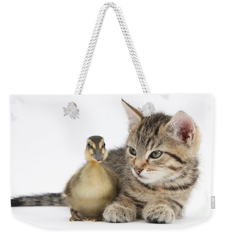 Nature Weekender Tote Bag featuring the photograph Kitten And Duckling by Mark Taylor