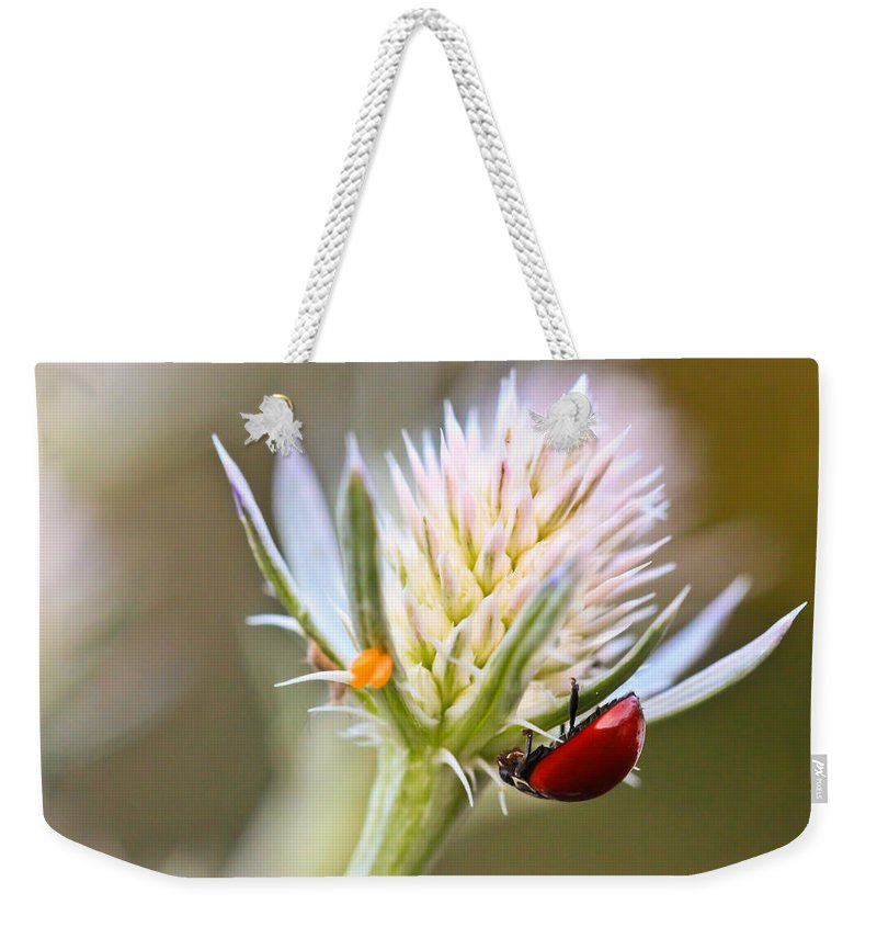 Ladybug Weekender Tote Bag featuring the photograph Ladybug On Thistle by Heidi Smith