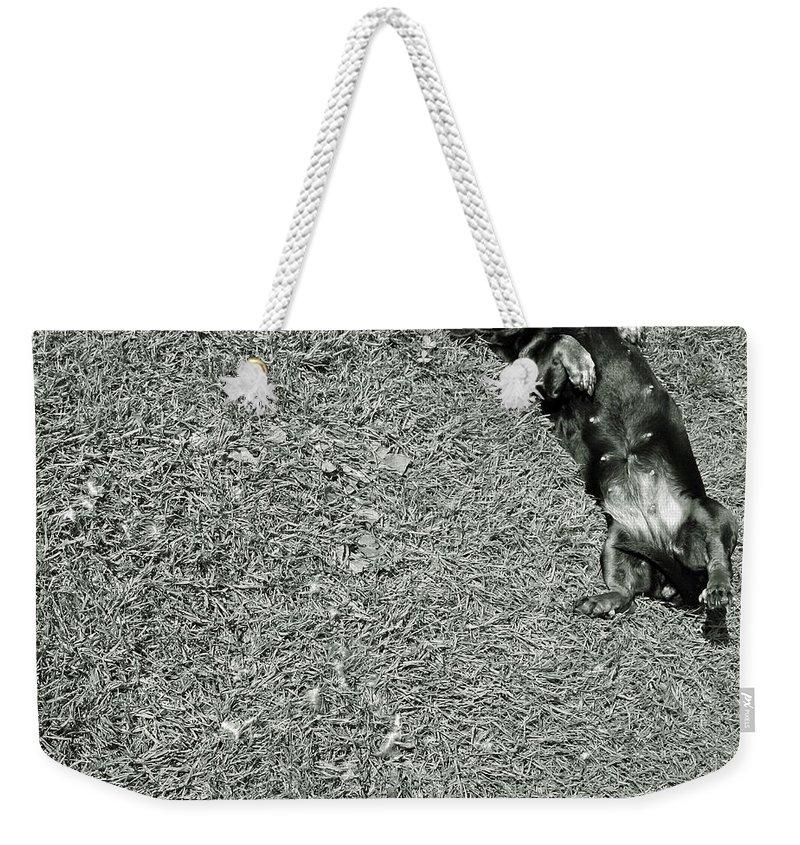 Dog Weekender Tote Bag featuring the photograph Lazy Daschund by Angel Ciesniarska