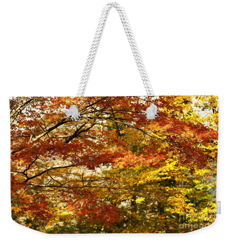 Maple Weekender Tote Bag featuring the photograph Maple Tree Foliage by Gaspar Avila