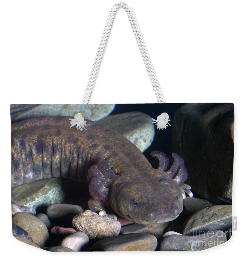 Mudpuppy Weekender Tote Bag featuring the photograph Mudpuppy by Ted Kinsman