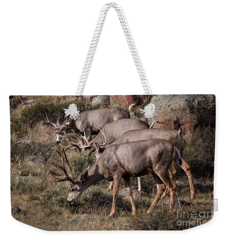 2012 Weekender Tote Bag featuring the photograph Mule Deer Bucks by Ronald Lutz