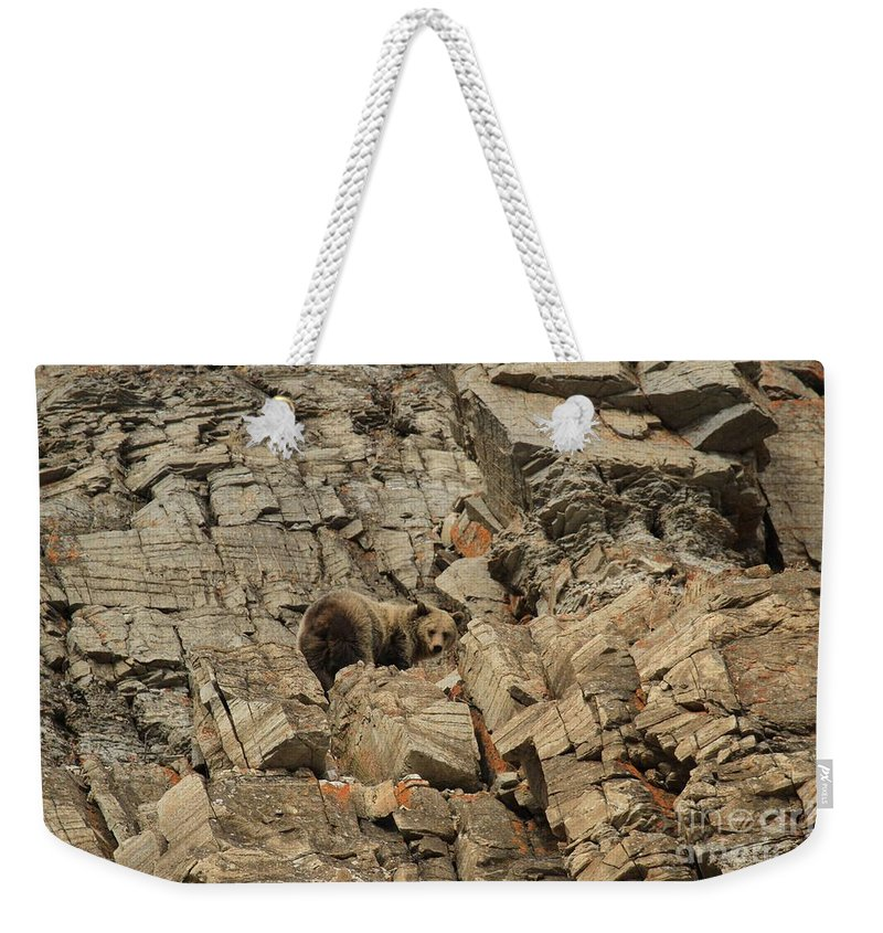 Grizzly Bear Weekender Tote Bag featuring the photograph On The Edge Of Glory by Adam Jewell