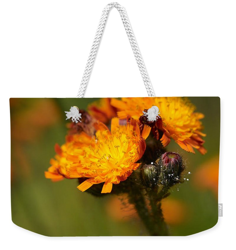 Jouko Lehto Weekender Tote Bag featuring the photograph Orange Hawkweed by Jouko Lehto