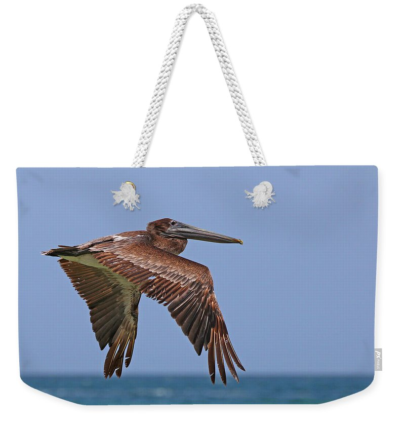 Adult Weekender Tote Bag featuring the photograph Pelican by Paul Fell