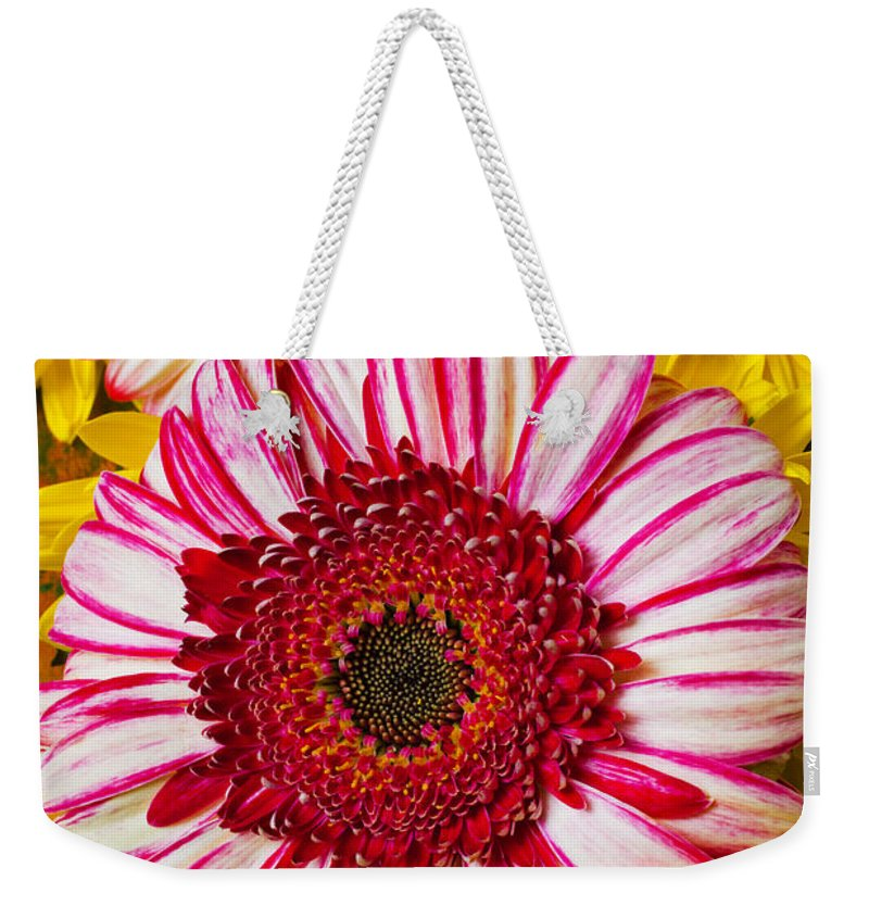 Pink Weekender Tote Bag featuring the photograph Pink And Yellow Mums by Garry Gay