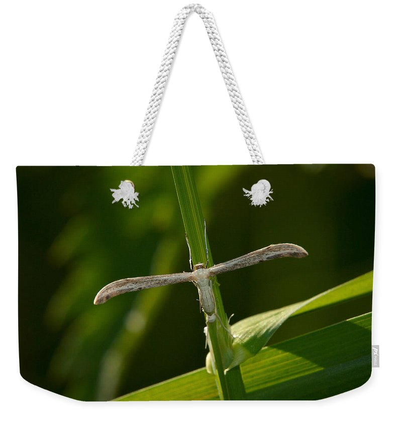 Jouko Lehto Weekender Tote Bag featuring the photograph Plume Moth by Jouko Lehto