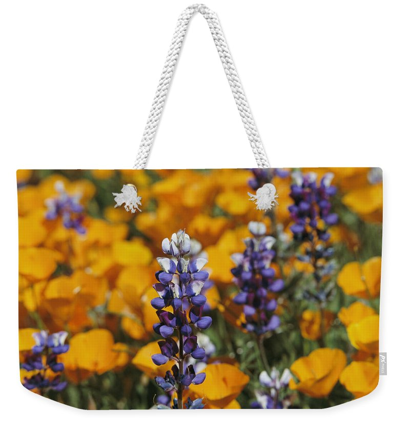 North America Weekender Tote Bag featuring the photograph Poppies And Lupine Flowers In A Santa by Marc Moritsch
