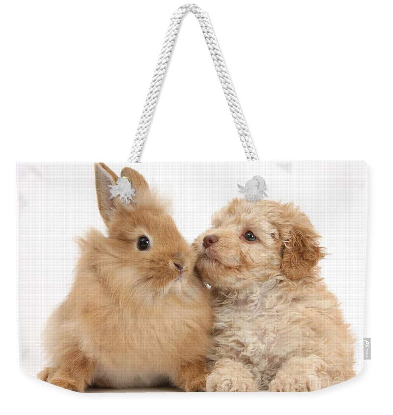 Nature Weekender Tote Bag featuring the photograph Puppy And Rabbit by Mark Taylor