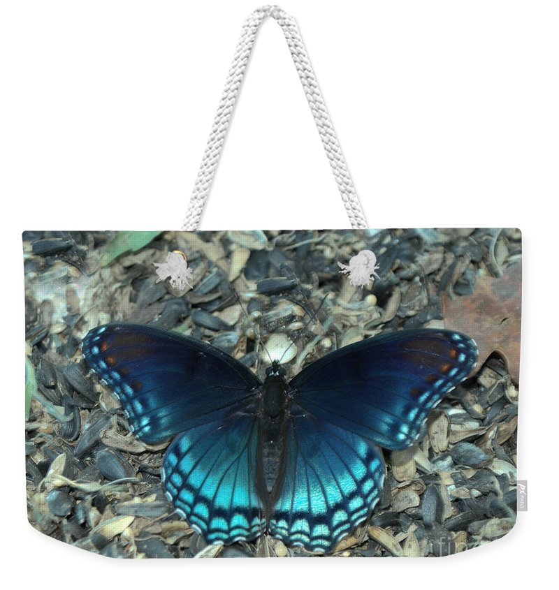 Insect Weekender Tote Bag featuring the photograph Red Spotted Purple Swallowtail Butterfly by Donna Brown