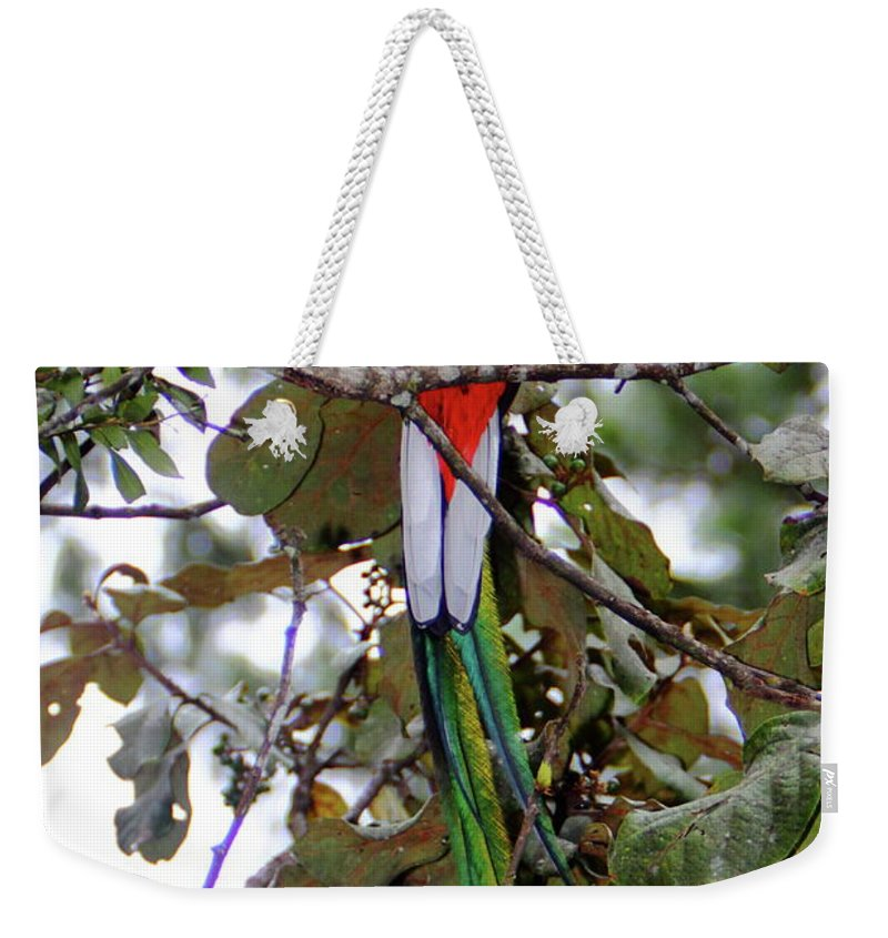 Quetzal Weekender Tote Bag featuring the photograph Resplendent Quetzal by Bruce J Robinson