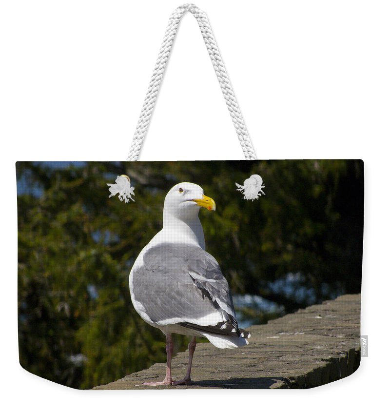 Seagull Weekender Tote Bag featuring the photograph Seagull by David Gleeson