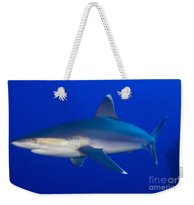 Carcharhinus Albimarginatus Weekender Tote Bag featuring the photograph Silvertip Shark, Kimbe Bay, Papua New by Steve Jones