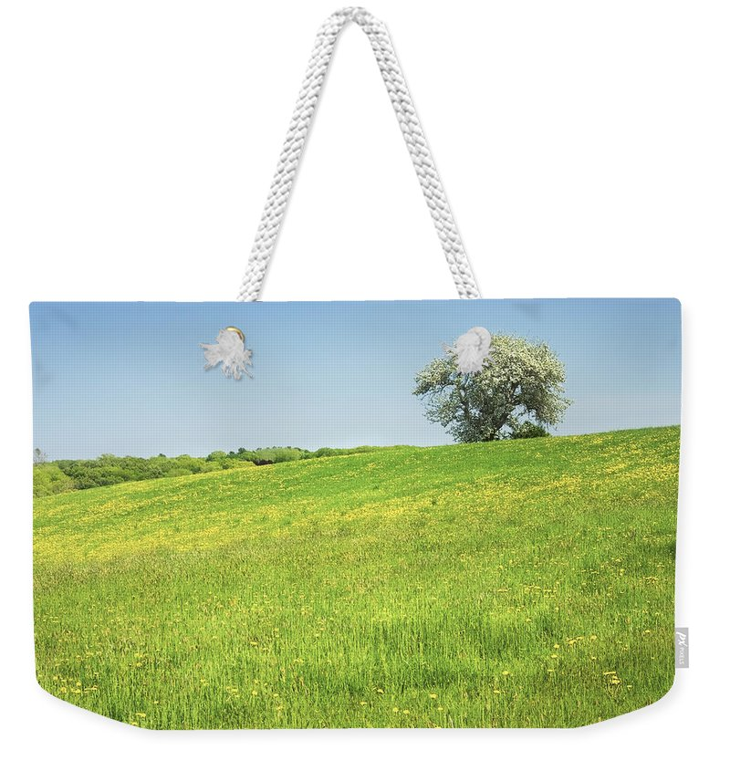 Field Weekender Tote Bag featuring the photograph Single Apple Tree In Maine Hay Field by Keith Webber Jr