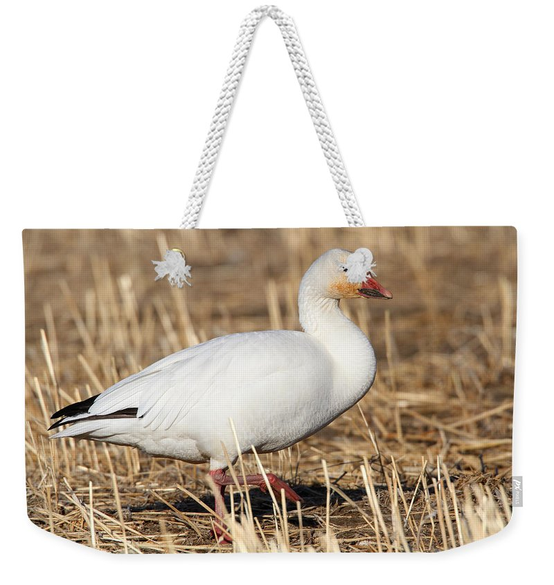 Doug Lloyd Weekender Tote Bag featuring the photograph Snow Goose by Doug Lloyd