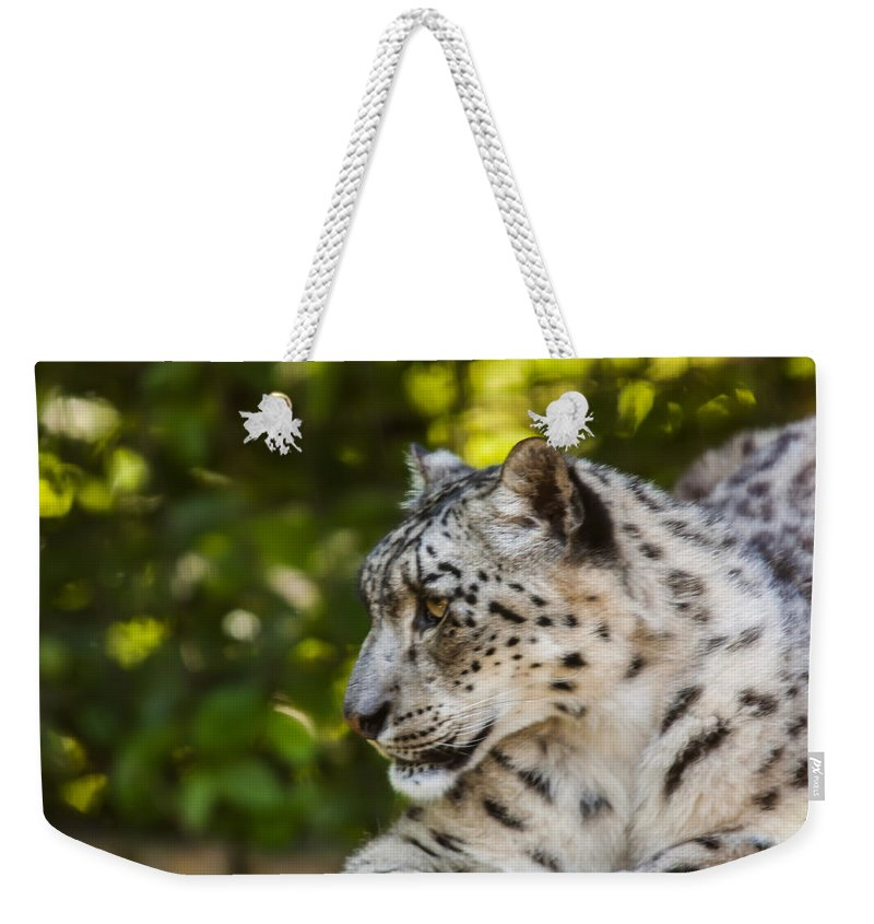 Dawn Oconnor Dawnoconnorphotos@gmail.com Weekender Tote Bag featuring the photograph Snow Leopard by Dawn OConnor