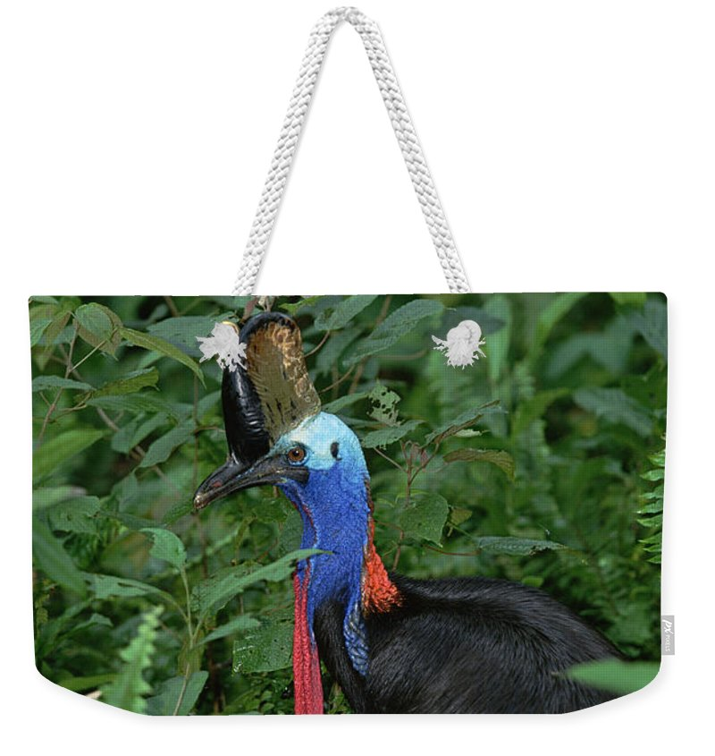 Mp Weekender Tote Bag featuring the photograph Southern Cassowary Casuarius Casuarius by Konrad Wothe