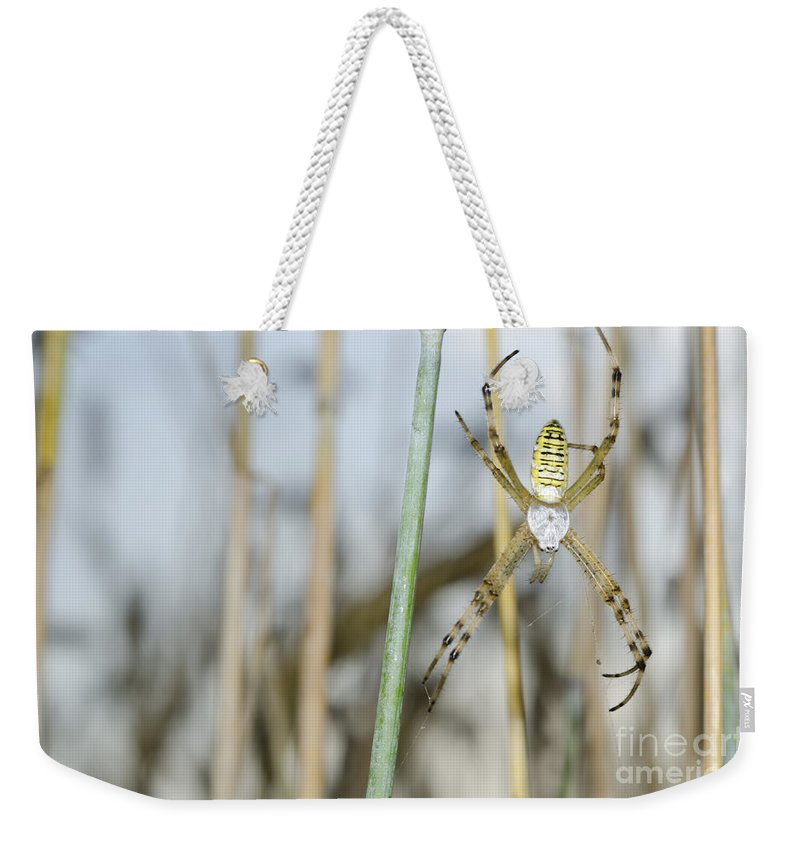 Spider Weekender Tote Bag featuring the photograph Spider by Mats Silvan