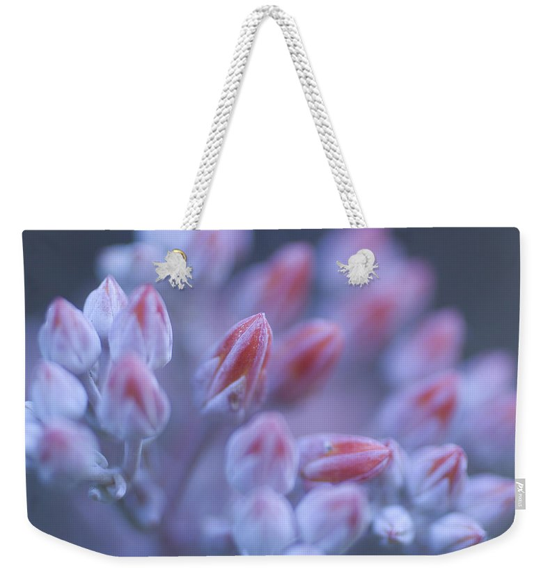 Photography Weekender Tote Bag featuring the photograph Stonecrop Flowers Emerge On An Early by Phil Schermeister