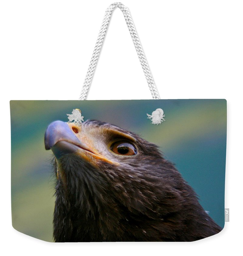 Animals Weekender Tote Bag featuring the photograph Hawk Eyes by Jean Noren