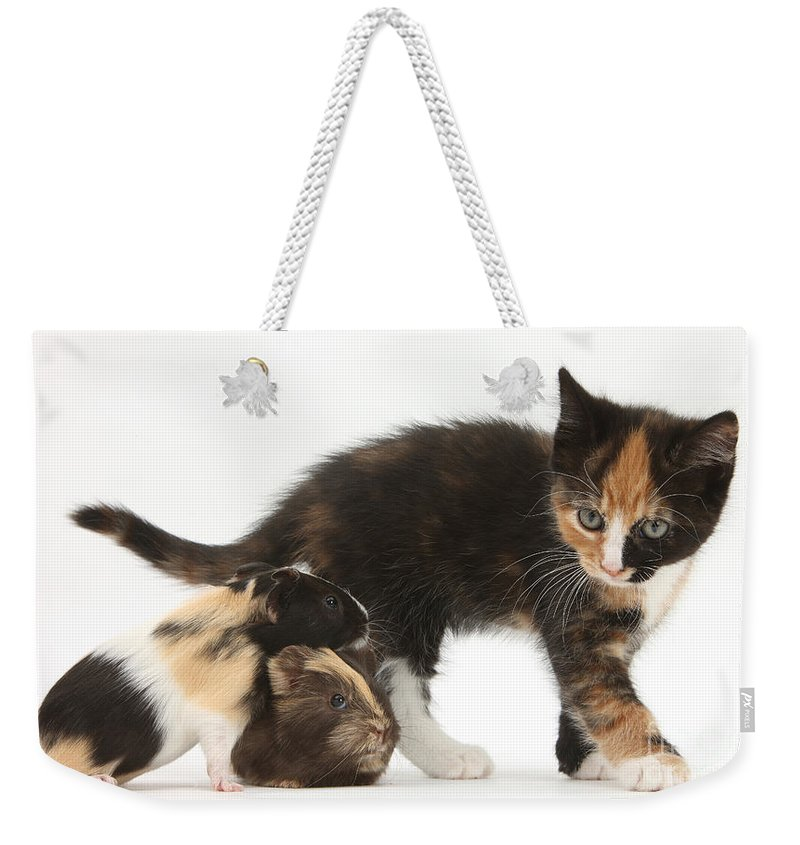 Nature Weekender Tote Bag featuring the photograph Tortoiseshell Kitten With Baby by Mark Taylor