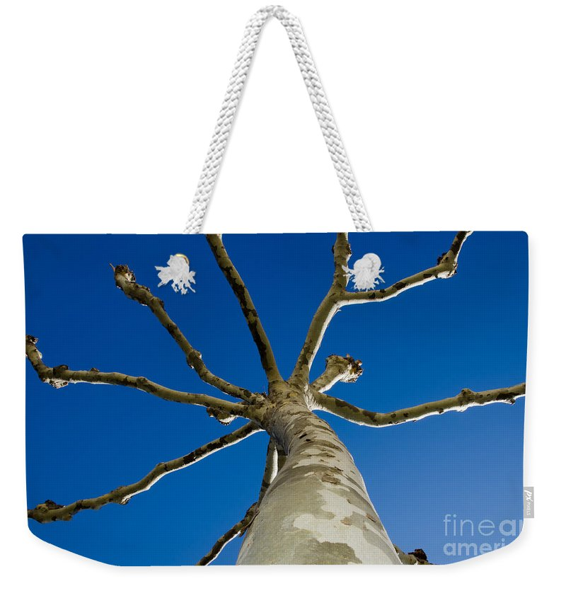Tree Weekender Tote Bag featuring the photograph Tree With Branches by Mats Silvan
