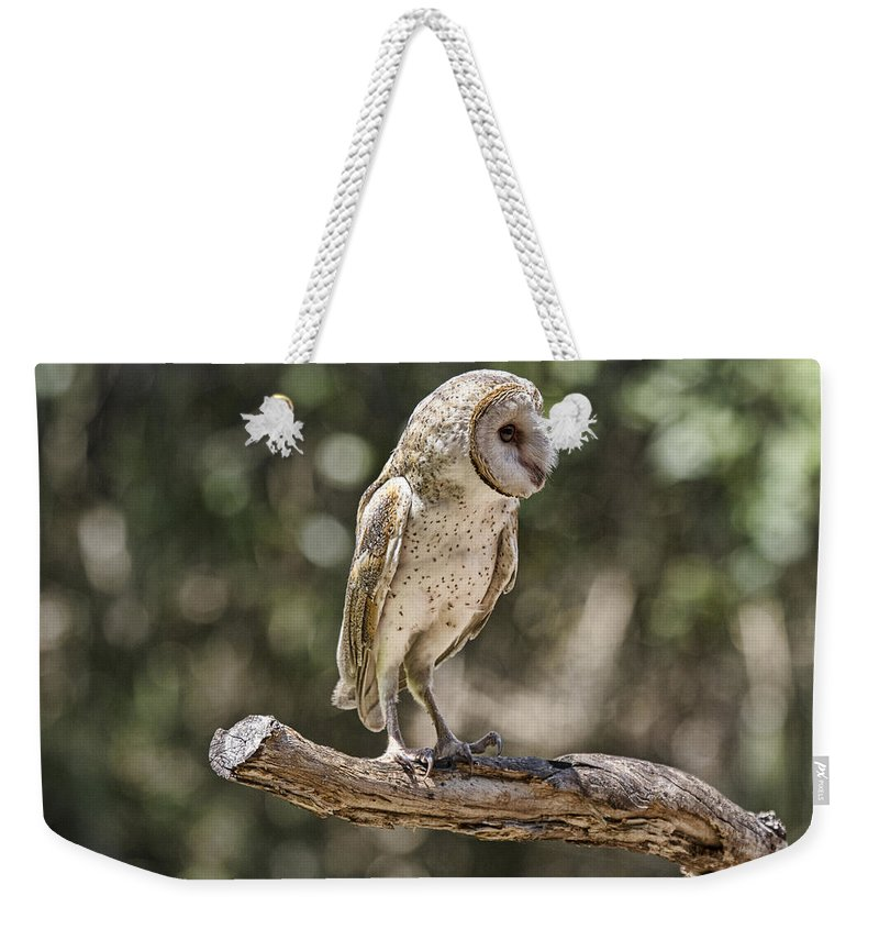 Barn-owl Weekender Tote Bag featuring the photograph Vantage Point V4 by Douglas Barnard