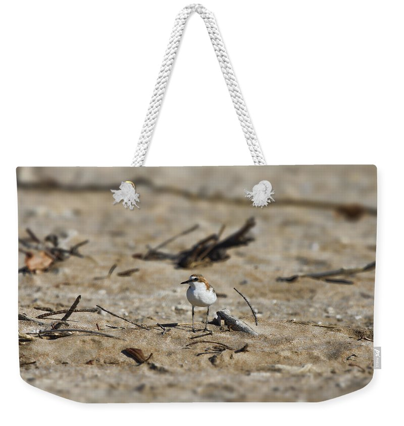 Wading Bird Weekender Tote Bag featuring the photograph Wading Bird by Douglas Barnard