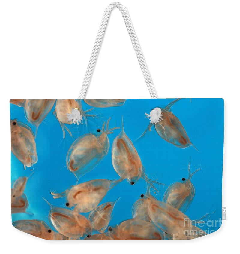 Water Flea Weekender Tote Bag featuring the photograph Water Flea Daphnia Magna by Ted Kinsman