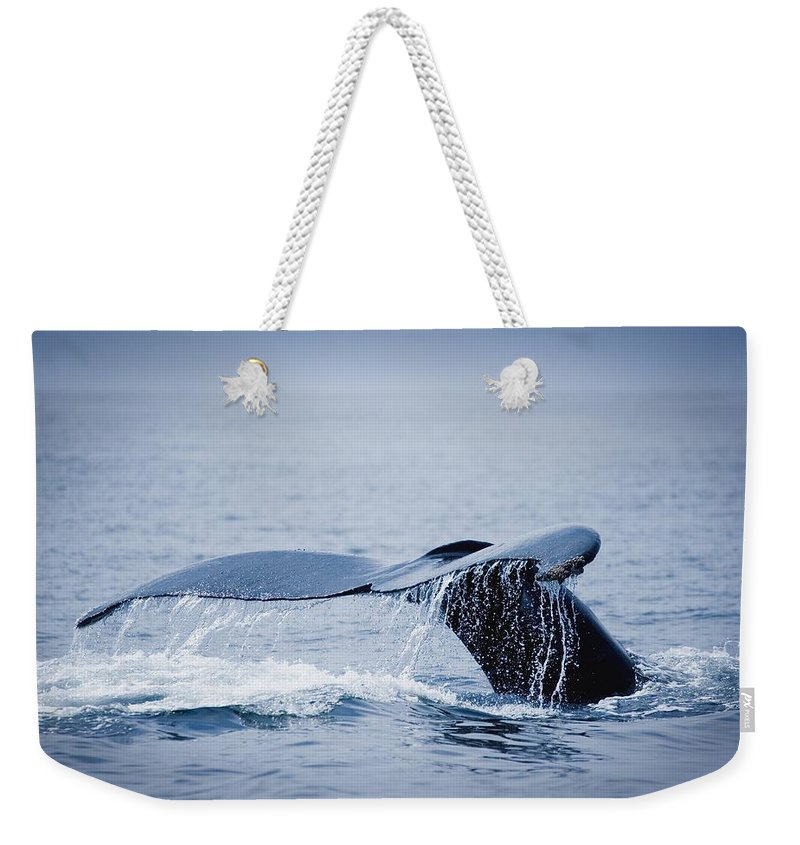 Outdoors Weekender Tote Bag featuring the photograph Whales Fluke by Darren Greenwood