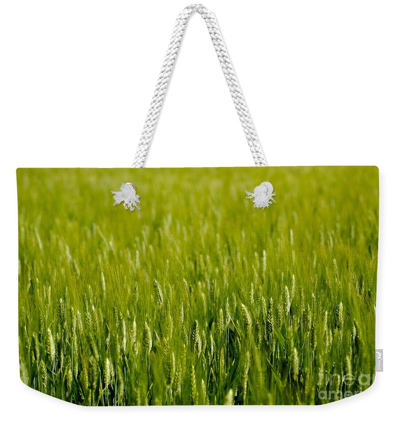 Wheat Weekender Tote Bag featuring the photograph Wheat Field by Mats Silvan