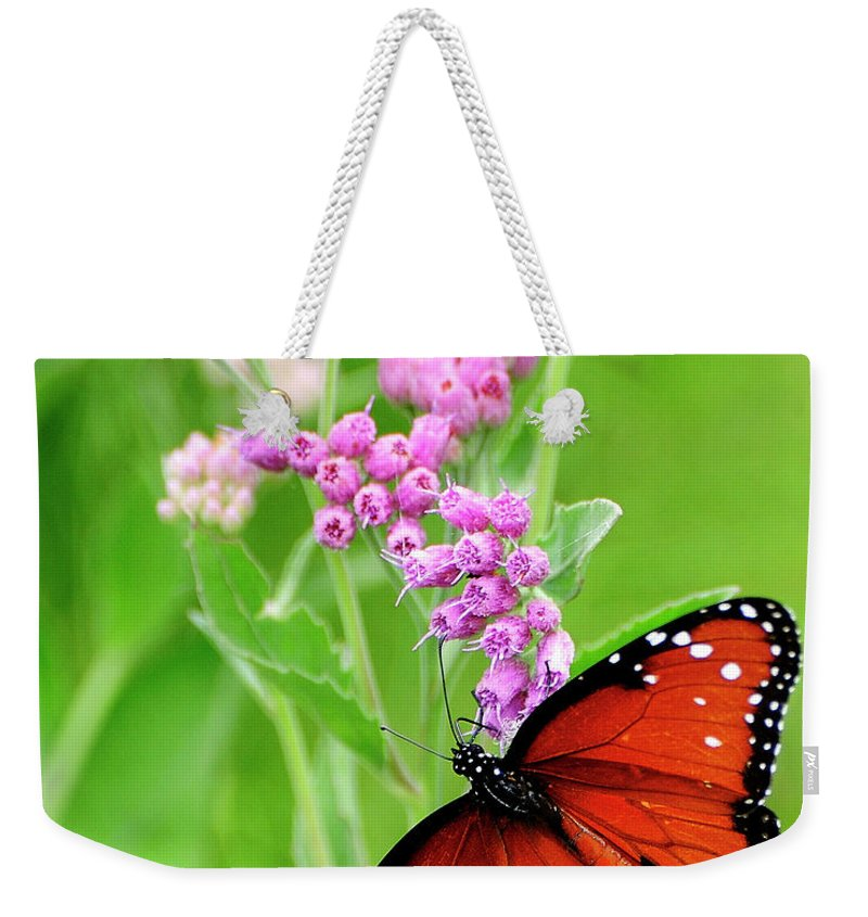 White Peacock Butterfly Weekender Tote Bag featuring the photograph White Peacock Butterfly by Bill Dodsworth
